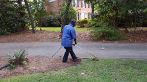 Lawn weed trimming Aiken